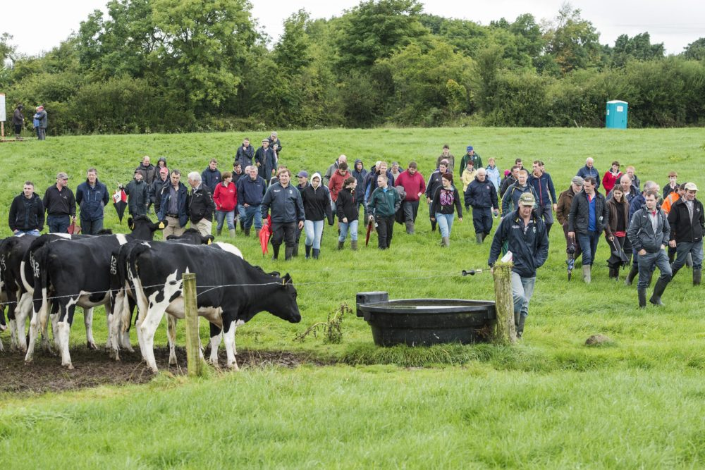 IHFA Cork Club Field Evening | Farm of James and Seamus Crowley, Coppeen, Co. Cork