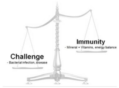 Challenge v Immunity graphic