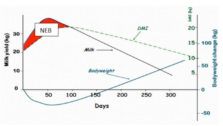 Negative energy balance chart
