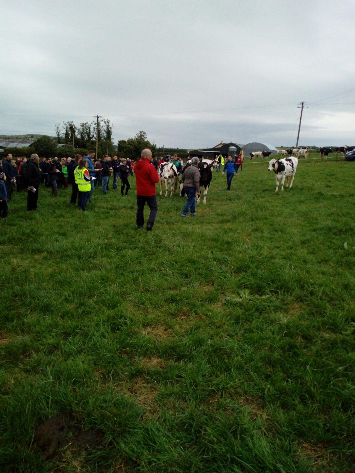 Holstein Freisan Event Moneygurran Holstein Herd, Coppeen, Co. Cork
