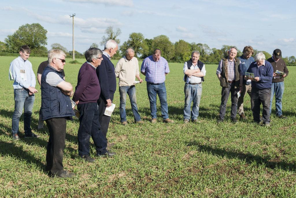 Dairygold/Teagasc Malting Barley Field Evening | Cashel, Co. Tipperary