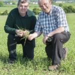 malting_barley_glanworth_2