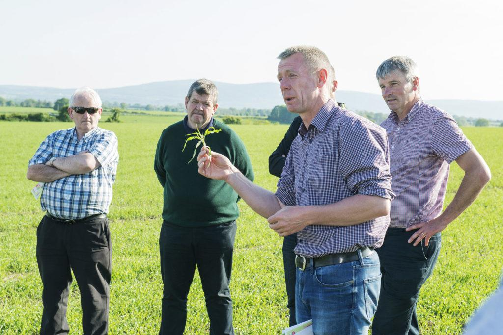 Dairygold/Teagasc Malting Barley Field Evening | Glanworth, Co. Cork