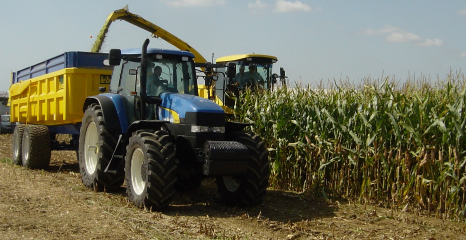How much grass silage will maize replace?