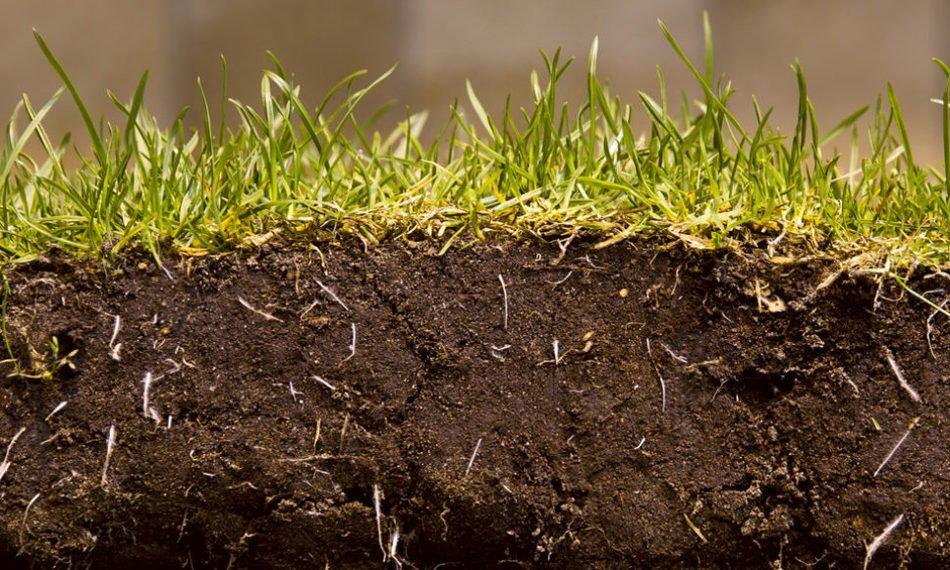 Why now is the best time to get your soil tested